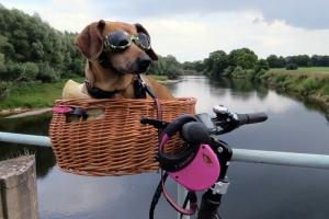 Cani, ciclabili e bocconi avvelenati